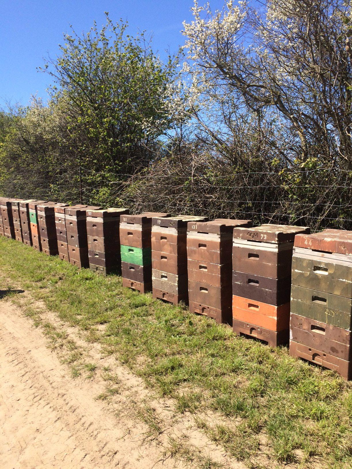 Bienenstöcke sind startklar
