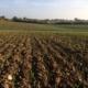 Da ist der Weizen
