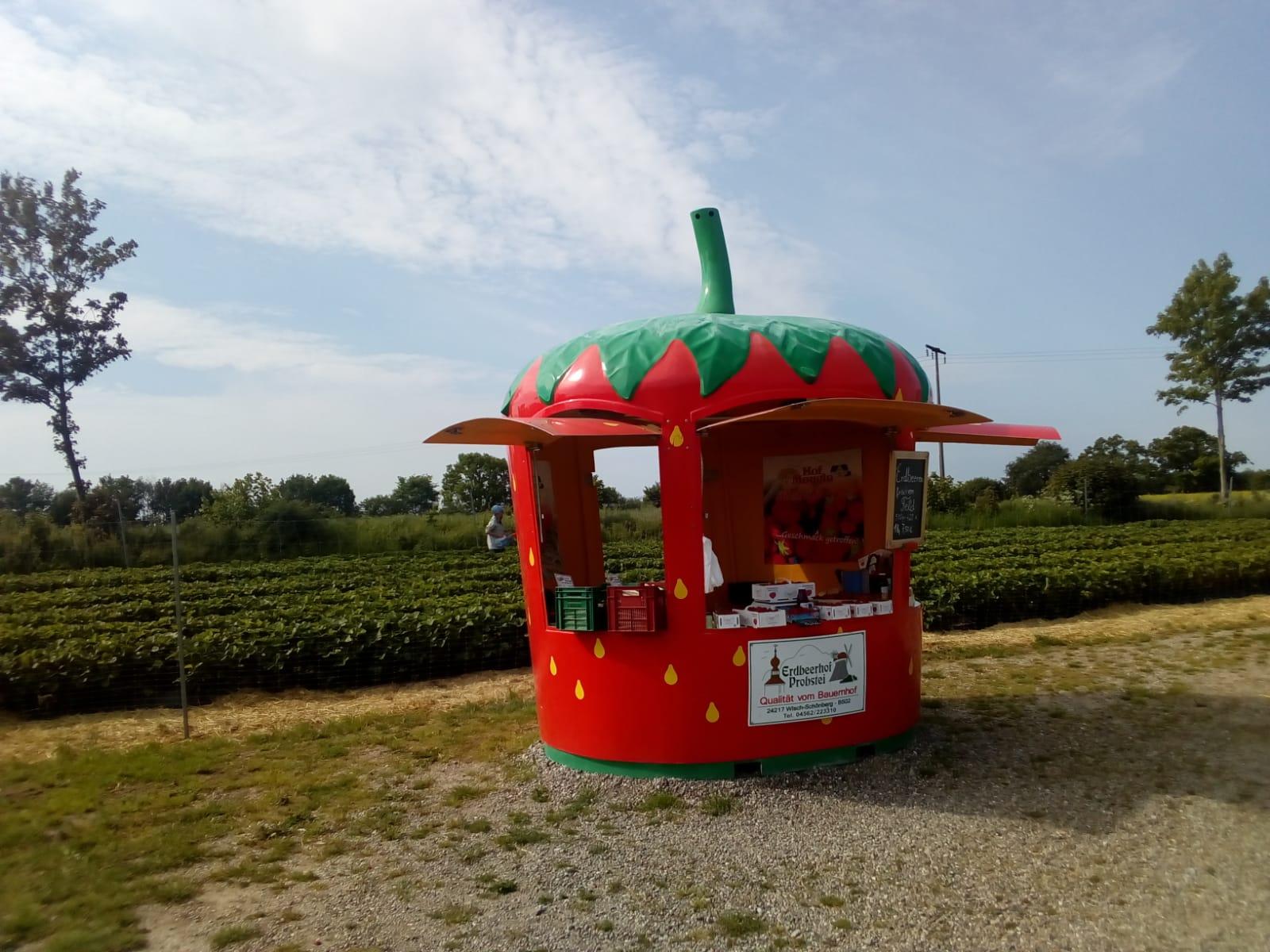 Verkaufserdbeer am Feldrand
