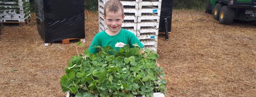 Heinrich hilft beim Pflanzen