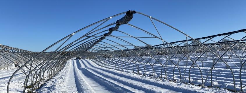 Folientunnel im Schnee - Hof Mougin